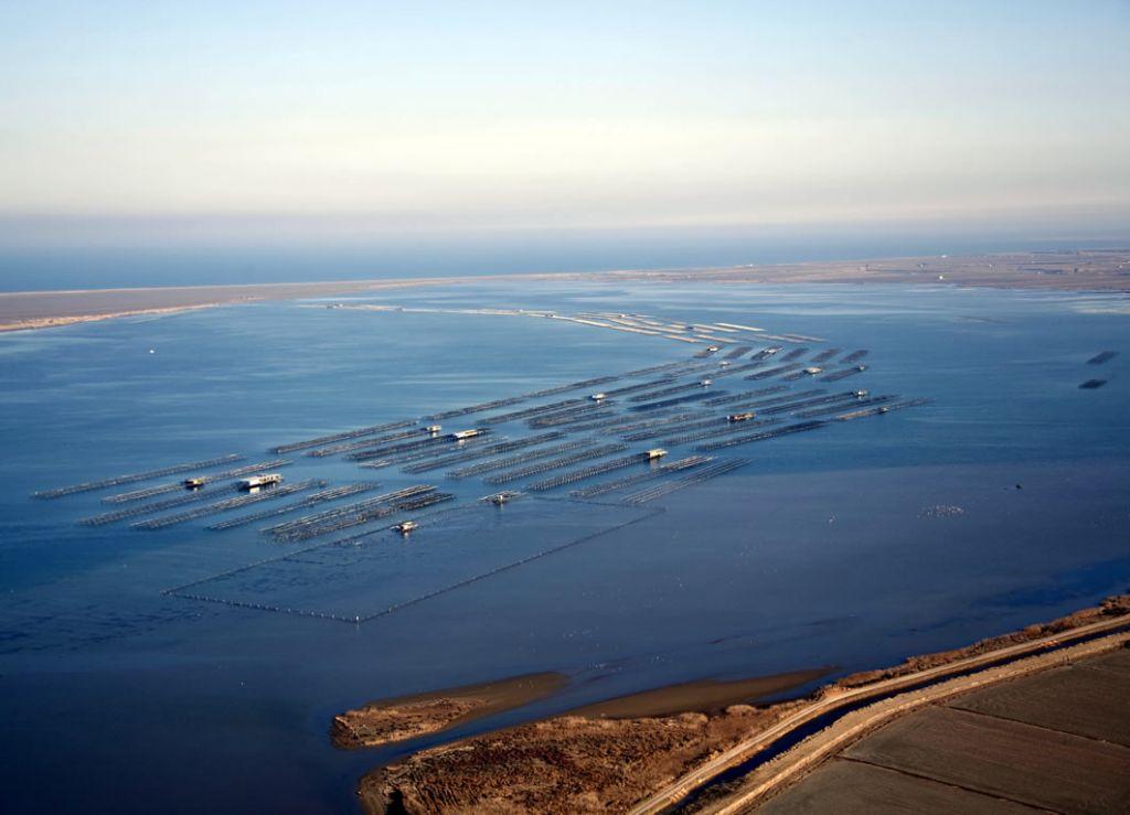 Les badies del delta de l'Ebre, Fangar i Alfacs 1